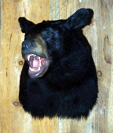 bear head for sale