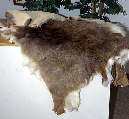 Beautiful Tanned Whitetail Deer Hides