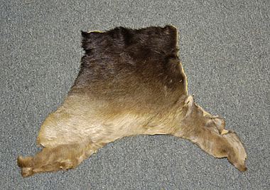 moose hides for sale